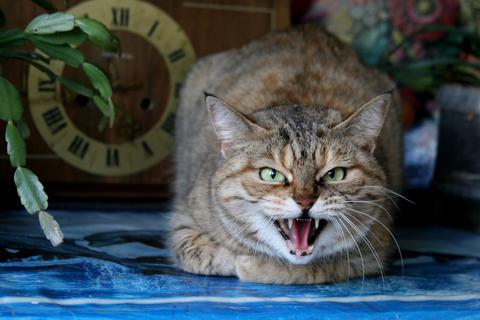 dealing with anger like a yogi